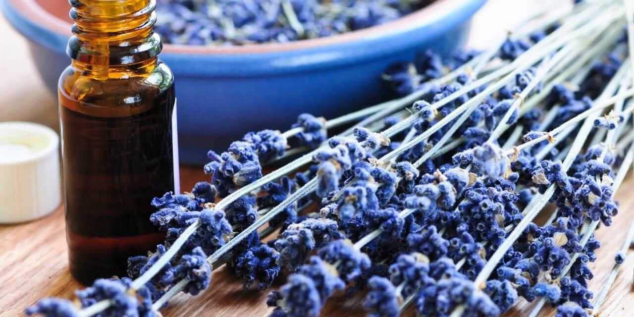 Lavendelöl ein altes Haushaltsmittel