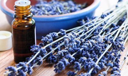 Lavendel – die Königin der Käuter