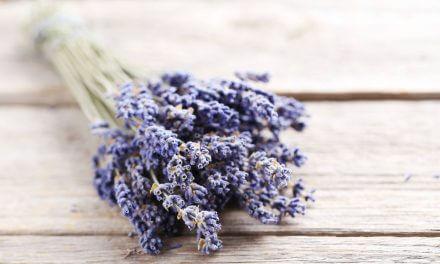 Lavendelöl Aromatherapie
