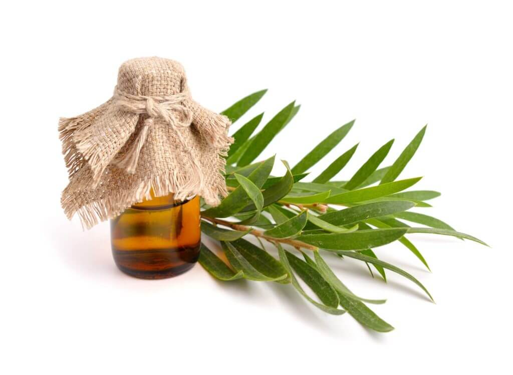 Teebaumöl in flasche