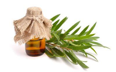 Teebaumöl für die Haut