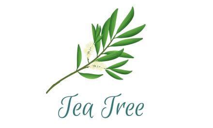 Teebaumöl für Zehennagel-Pilze