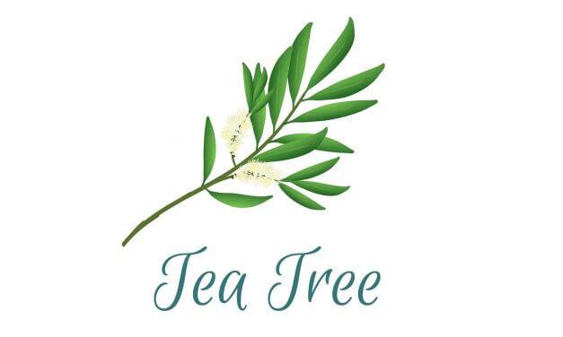 Teebaumöl gegen Sonnenbrand Rezepte