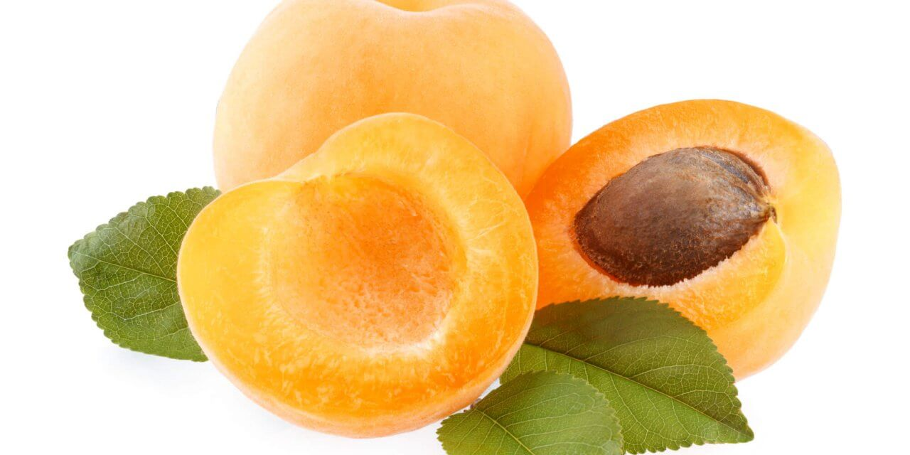 Aprikosenfruchtsamen